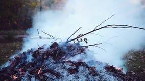Het branden van organisch huisvuil in het park stock video