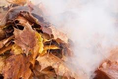 Het branden van oude bladeren Royalty-vrije Stock Afbeeldingen
