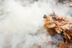 Het branden van oude bladeren Stock Afbeeldingen