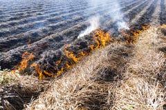 Het branden van overblijfselen in landbouwcultuur stock foto's