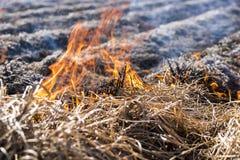 Het branden van overblijfselen in landbouwcultuur stock afbeelding