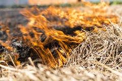 Het branden van overblijfselen in landbouwcultuur stock fotografie