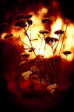 Het branden zonsondergang Stock Afbeeldingen