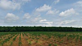 Het brede landschap van de rubberboomaanplanting Stock Afbeeldingen