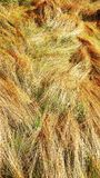 Het brede open zonlicht van de het grasweide van het de lenteland Royalty-vrije Stock Afbeeldingen