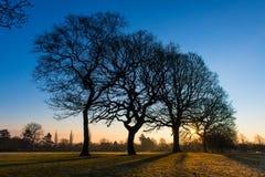 Het breken van de Zon van de ochtend door Bomen Royalty-vrije Stock Fotografie