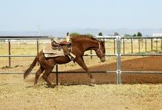 Het breken van een jong paard Royalty-vrije Stock Afbeeldingen