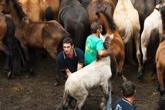 Het breken van een klein paard Royalty-vrije Stock Foto's