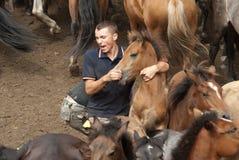 Het breken van een wild paard Stock Foto's