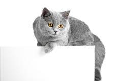 Het Britse blauwe kat gemakkelijke liggen op tablet Stock Afbeelding