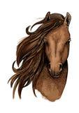 Het bruine artistieke portret van het mustangpaard Royalty-vrije Stock Afbeeldingen