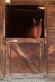 Het bruine baaipaard bekijkt uit de stal in een schuur Royalty-vrije Stock Fotografie