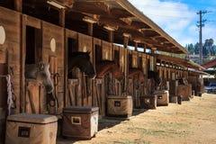 Het bruine baaipaard bekijkt uit de stal in een schuur Stock Foto's