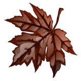 Het bruine die blad van de de herfstesdoorn op witte achtergrond wordt geïsoleerd De vectorillustratie van het beeldverhaalclose- Stock Fotografie