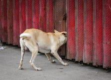 Het bruine hond spelen bij de krottenwijk royalty-vrije stock foto