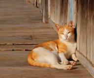 Het bruine katjeskat ontspannen op houten vloer royalty-vrije stock afbeeldingen