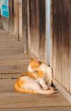 Het bruine katjeskat ontspannen op houten vloer stock afbeelding