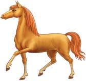 Het bruine paard gaat. Stock Foto's
