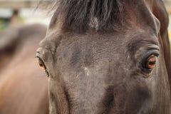 Het bruine paard letten op royalty-vrije stock foto's