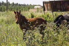 Het bruine paard loopt ver weg en eet gras in de weide met bloemen en bomen travelling stock afbeeldingen