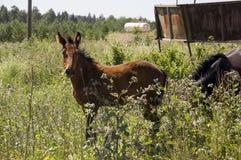 Het bruine paard loopt ver weg en eet gras in de weide met bloemen en bomen travelling stock fotografie