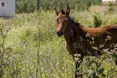 Het bruine paard loopt ver weg en eet gras in de weide met bloemen en bomen travelling royalty-vrije stock fotografie