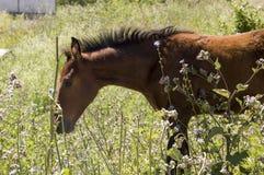 Het bruine paard loopt ver weg en eet gras in de weide met bloemen en bomen travelling stock afbeelding