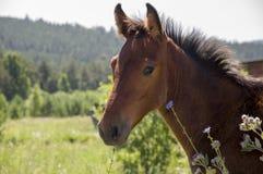 Het bruine paard loopt ver weg en eet gras in de weide met bloemen en bomen travelling royalty-vrije stock afbeeldingen
