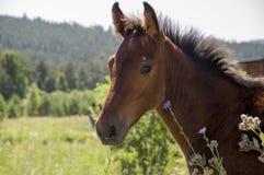 Het bruine paard loopt ver weg en eet gras in de weide met bloemen en bomen travelling royalty-vrije stock foto's