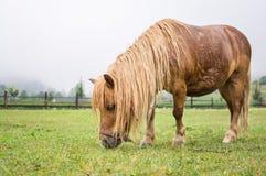 Het bruine poney weiden Royalty-vrije Stock Afbeeldingen