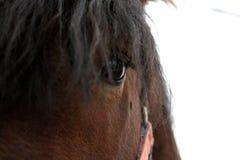 Het bruine Snuit mooie paard in rode teugel kijkt uit dicht stock afbeeldingen