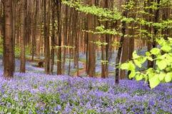 Het buigen door een blauw tapijt royalty-vrije stock afbeeldingen