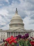 Het Capitool van Verenigde Staten de voorgevel van het de Bouwoosten - Washington DC royalty-vrije stock afbeeldingen