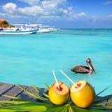Het Caraïbische verse de pelikaan van de kokosnotencocktail zwemmen Stock Afbeelding