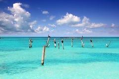 Het Caraïbische tropische overzees van het pelikaan turkooise strand Stock Foto's