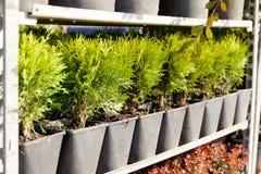 Het centrum van de plantkundeplantenkwekerij, kleurrijke decoratieinstallaties kleinhandels stock afbeeldingen