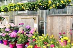 Het centrum van het tuinkinderdagverblijf met boterbloemen, gele narcissen en pannen wordt gevuld die Stock Foto