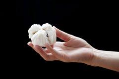 Het Chinese gestoomde broodje van het barbecuevarkensvlees (Dim Sum) Stock Fotografie