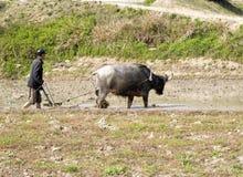 Het Chinese landbouwer werken Stock Fotografie
