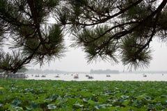 Het Chinese meer met vent boten, pijnboomboom en lotusbloem in voorgrond stock afbeeldingen