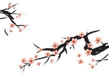 Het Chinese schilderen van roze pruim Royalty-vrije Stock Afbeeldingen