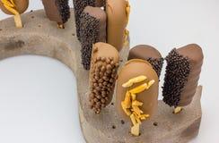 Het chocoladeroomijs knalt Stock Fotografie