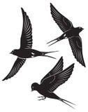 De vogel slikt stock illustratie
