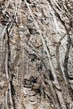 Het cirkelen van sporen bij natte vuilweg Stock Afbeelding
