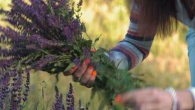 Het close-up, Mooie Vrouw verzamelt een Boeket van Wildflowers Vaselok in het Bos stock footage