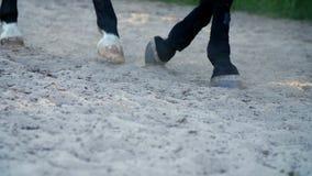 Het close-up, het paard loopt langs het zand kan gezien hoeven zijn hoofs gang op zandstof stock footage