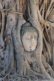 Het close-up ruïneerde het hoofddiestandbeeld van Boedha tussen Boomwortels bij historisch park wordt opgesloten, reisbestemming  Royalty-vrije Stock Foto's