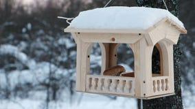 Het close-up sneed houten vogelvoeder op de boom in bospark stock video