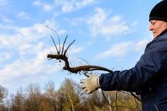 Het close-up, tuinlieden in de lente probeert om een droge boom te verwijderen, die zijn wortels met een schop in een groot droog stock afbeeldingen