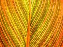 Het close-up van bladvenation Royalty-vrije Stock Fotografie